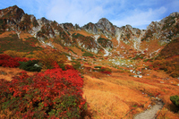 Autumn leaves and Senjojiki Carl of rowan Stock photo [1304392] nagano