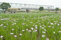 Iris Keisei train Stock photo [1305797] Park