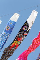 Carp streamer Stock photo [1307444] Carp