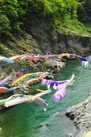 Carp swim in the Yoshino Oboke Gorges Stock photo [1389109] Carp