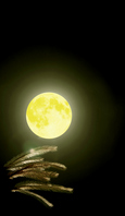 Of Mid-Autumn night with a full moon harvest moon and pampas grass Stock photo [1389144] Harvest