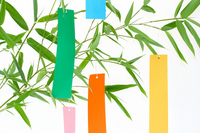 Tanabata bamboo leaves and strip Stock photo [1389200] Tanabata