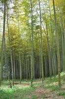 Asuka bamboo forest Stock photo [1391250] Asuka