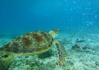 Sea turtle Stock photo [1393063] Sea