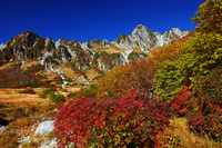Autumn leaves and Senjojiki Carl of rowan Stock photo [1394372] Nagano