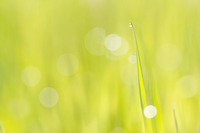 Grass and sparkling in the morning dew Stock photo [1398109] Grass