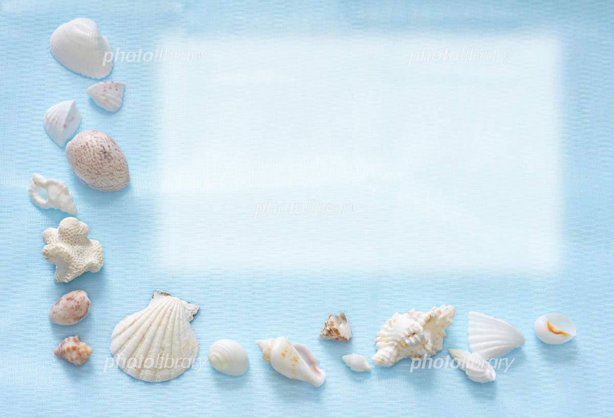 貝殻のフレーム 写真素材 ... : 無料フレームダウンロード : 無料