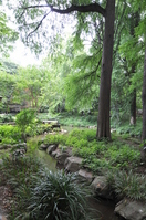Forest Hayashi荅 Stock photo [1483439] Tokyo