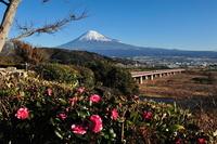 富士川パーキングエリアから見た富士山