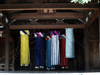 みたままつりの七夕飾り の写真素材