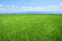 Rural landscape of Niigata City, Kita-ku, Stock photo [1488136] Idyll