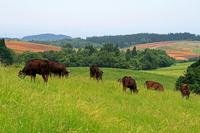 Gassan ranch Stock photo [1489294] Yamagata