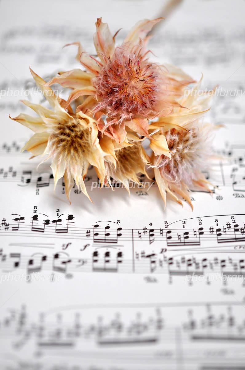 楽譜 ドライ フラワー