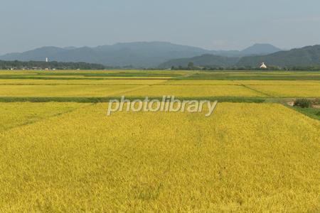 穀倉地帯 写真素材 [ 1595322 ] - フォトライブラリー photolibrary