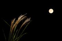 Moon-viewing Stock photo [1585746] Moon-viewing