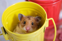 Adventures of hamster Stock photo [1586448] Small
