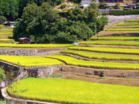 Autumn of rice terraces Stock photo [1590808] Rice
