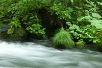 Oirase stream Stock photo [1592571] Aomori