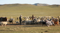 Mongolian steppe nomads and sheep and mountain sheep Stock photo [1593177] Mongolia