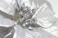 Silver poinsettia Stock photo [1689066] Christmas