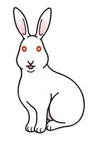 Japanese white rabbit Rabbit