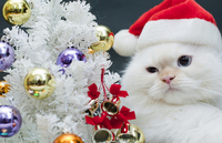 Tree and cat Stock photo [1690275] Christmas