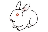 White Rabbit Rabbit