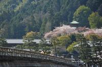Spring Tsukihashi passed Arashiyama Kyoto Stock photo [1693089] Arashiyama