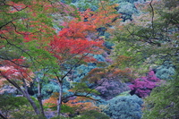 Forest of seven colors Stock photo [1693679] Autumn