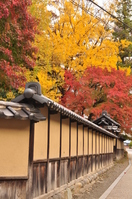Autumn leaves and earthen wall Stock photo [1695972] Town