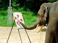 Elephant painting Stock photo [1698525] Elephant