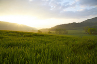 Hokkaido dairy zone to be wrapped in the morning mist Stock photo [1698624] Prairie