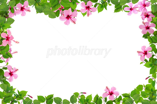 Hibiscus frame Photo