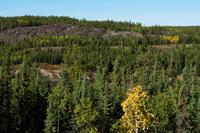 Arctic forest Stock photo [1764558] Arctic