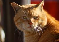 Tabby Stock photo [1771523] CAT