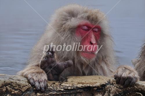 猿の入浴-写真素材