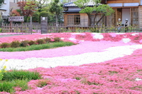 Guo Moruo garden ground pink Stock photo [1867797] Guo
