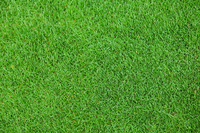 Lawn natural grass Stock photo [1871385] Lawn
