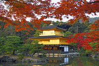 Kinkakuji of autumn stock photo