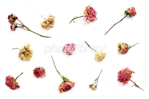 花模様のように散らしたバラのドライフラワー 写真素材 1983771