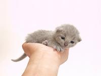 Kitten riding in hand Stock photo [1977443] Kitten