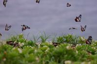 Madara Butterfly Stock photo [1978063] Madara