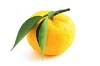 Citron Stock photo [2084837] Citron