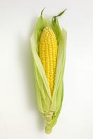 Corn Stock photo [2089256] Corn