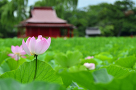 Sarka shrine of lotus Stock photo [2091031] Lotus
