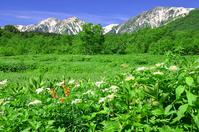 Tsugaike wetlands Stock photo [2092053] Tsugaike