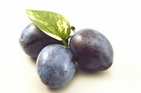 Leaves of prunes and pothos Stock photo [2185898] Prune