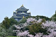 Sakura bloom Okayama Castle Stock photo [2188263] Cherry