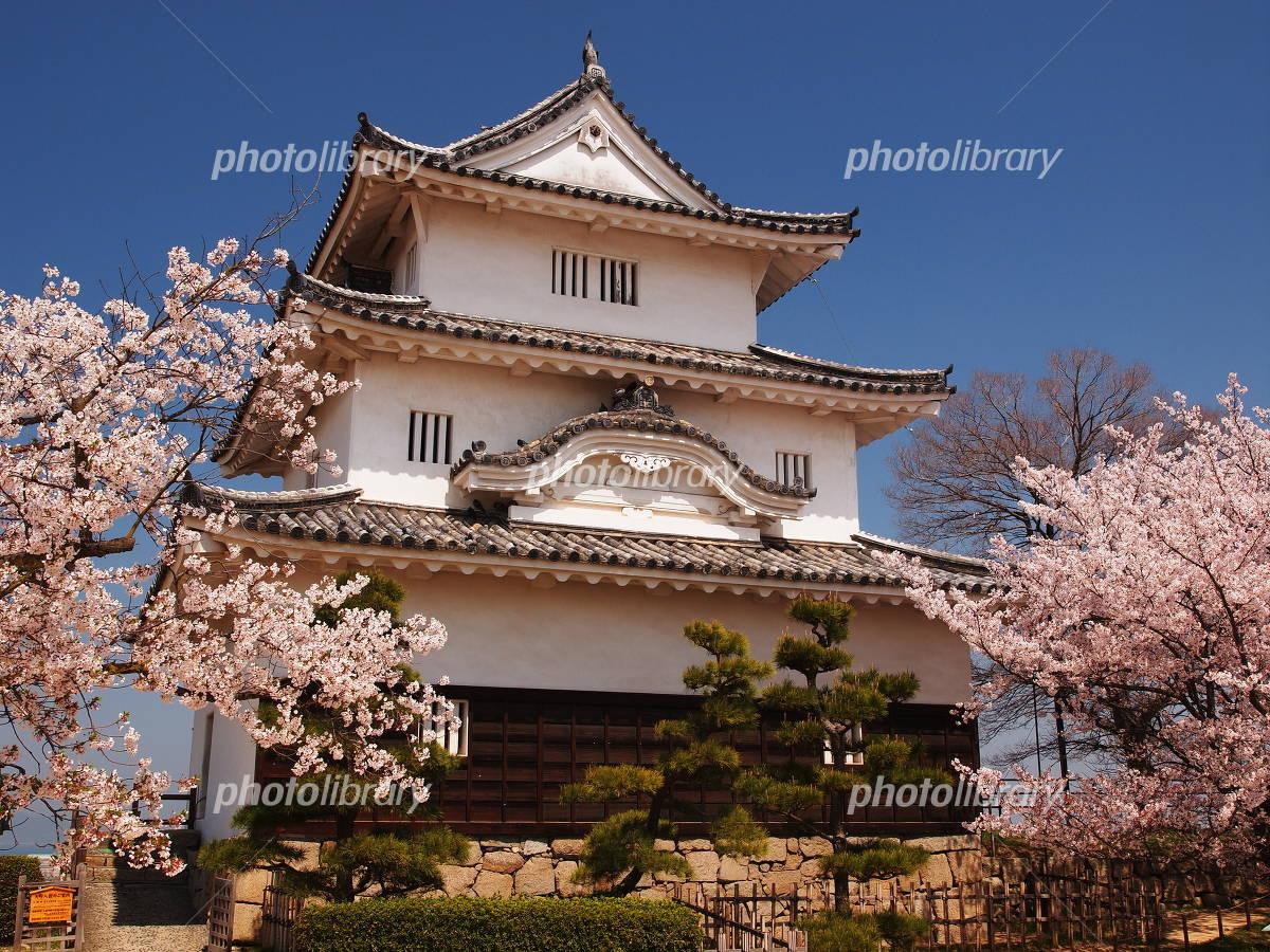 Sakura bloom Marugame Castle Photo