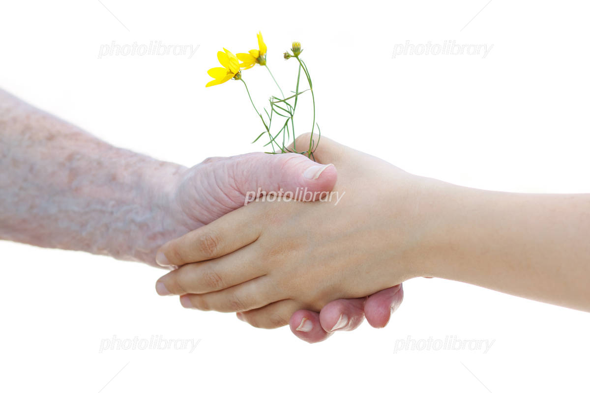 Yellow flowers take a senior hands Photo